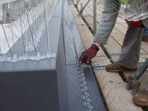 bird netting2 300x224 - Controle de Pombos