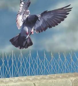 pigeon proofing toronto 273x300 - Controle de Pombos